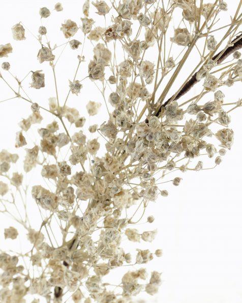Corona de flors naturals petites. Col·lecció ROSA CLARA COUTURE 2022.
